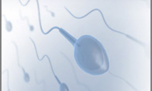 Overcoming No Sperm Count:  Azoospermia