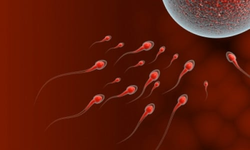What Can Testing Tell You About Male Factor Infertility?